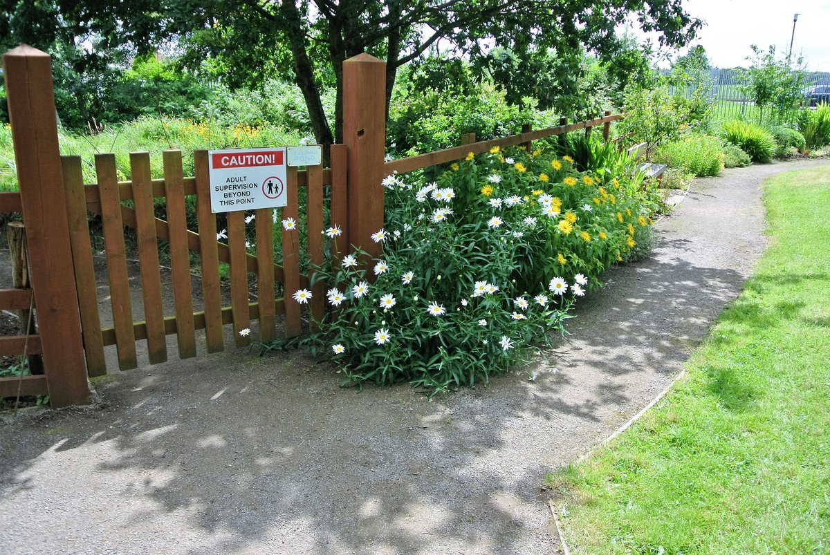 Green meadow edge at St Peter's in Fairwater