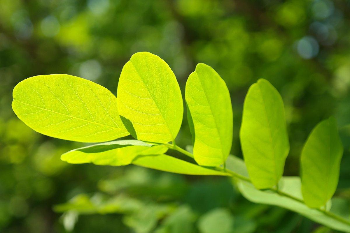 leaf-141494_1920.jpg